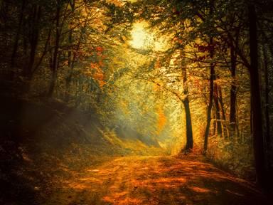 Positive attitudes find light even in the dark